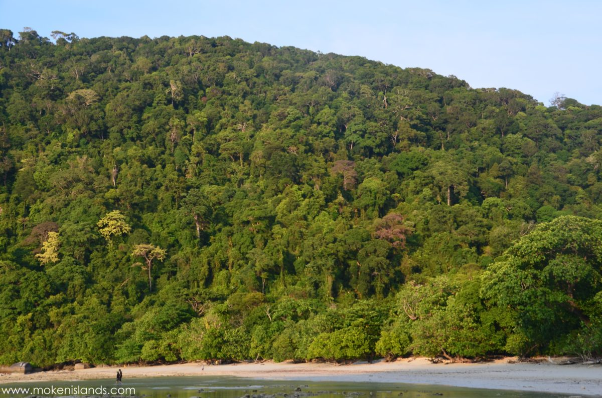View over the Forest at Mai Ngam Bay